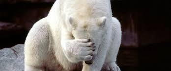 polarbear shame